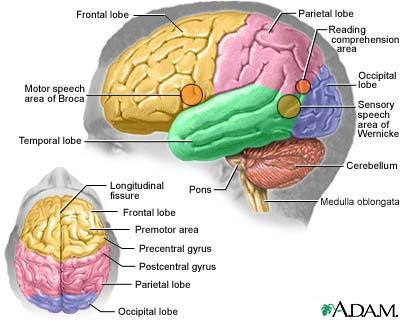 http://tfakhrizalspd.files.wordpress.com/2009/08/brain-picture.jpg