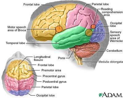 http://tfakhrizalspd.files.wordpress.com/2009/08/brain-picture.jpg